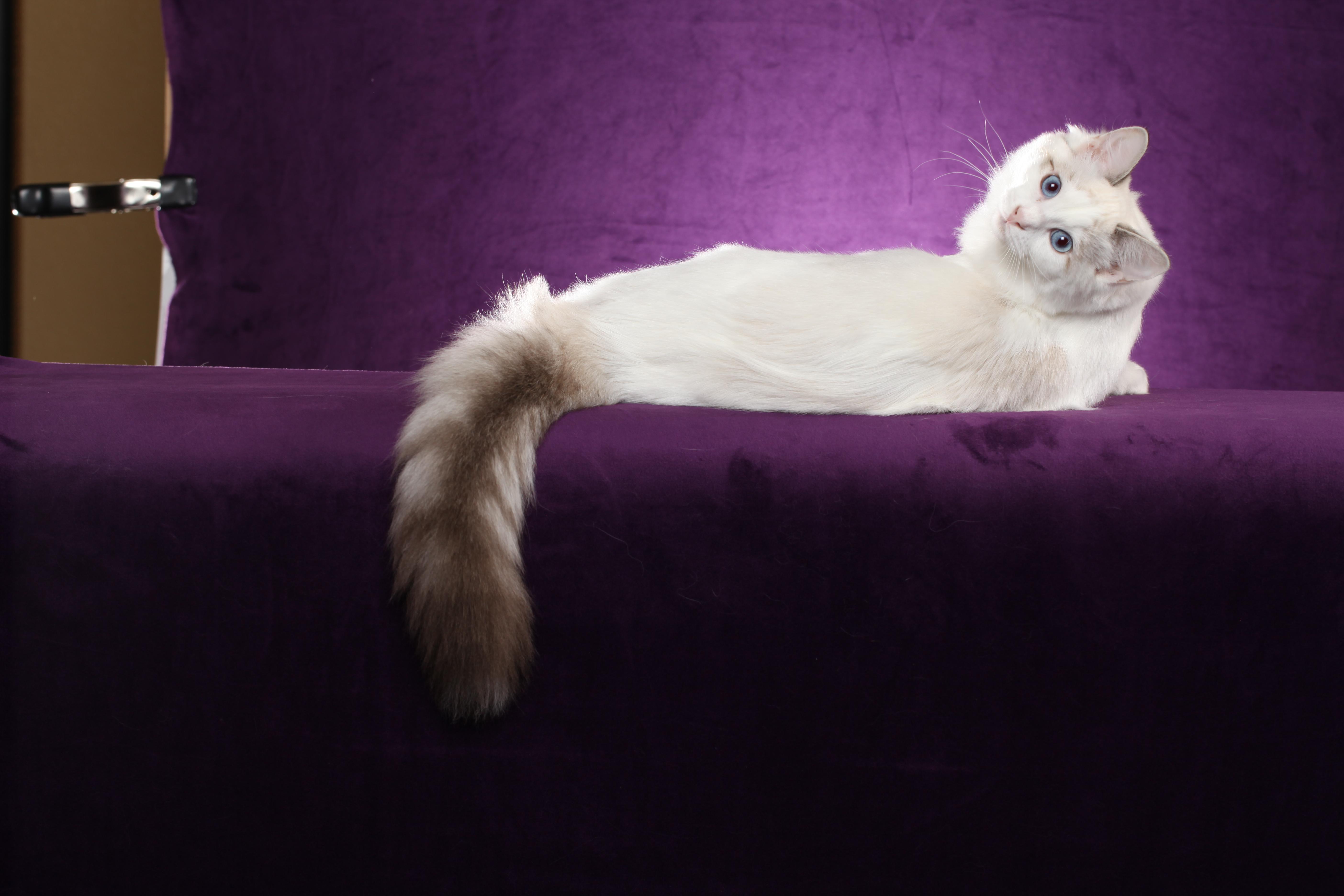 Kittens for Sale in texas  PetSale Inc